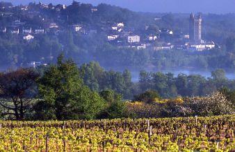 Loire_196_Vignes_Oudon_Philippe_Caharel.jpg