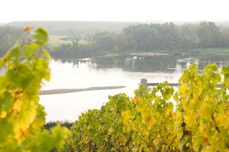 776_La_Loire_vignes_automne_Stevens_Frémont.jpg
